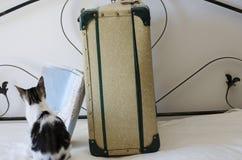 老手提箱减速火箭的意大利样式和猫 库存照片