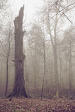老打破的树在秋天天 库存图片