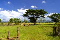 老挝人农场 免版税库存图片