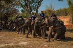 老挝人大象节日, Hongsa,老挝 库存图片