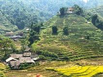 老挝人柴 免版税图库摄影