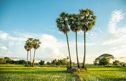 老挝人的生活 免版税图库摄影