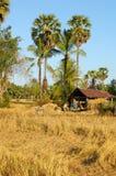 老挝湄公河村庄 免版税库存图片