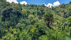老挝琅勃拉邦Nahm东公园神的密林 库存照片