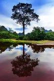 老挝的反射。树。 免版税库存照片