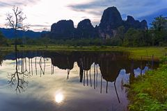 老挝的反射。老树。 免版税库存照片