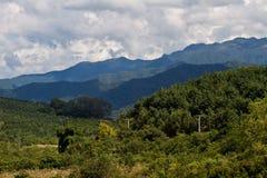 老挝的自然风景 风景的横向 美好的安排 松鸡爱本质歌曲通配木头 免版税库存照片