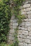 老放置从石灰石,被缠绕的植物 免版税库存照片