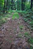 老无盖货车路在森林 库存照片