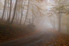 老有薄雾的路通过山毛榉森林 库存照片