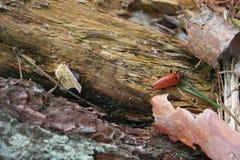 老木与甲虫 免版税图库摄影