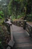 老木台阶向下在亚洲庭院里在台湾 库存图片