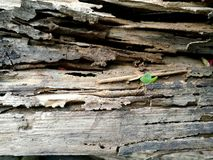 老木头的表面 免版税库存照片