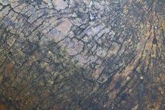 老木头破裂的纹理 库存照片