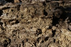 老木头结构与树皮甲虫踪影的 免版税图库摄影
