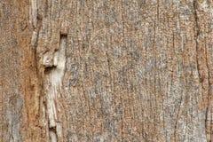 老木头老纹理在背景图象的 免版税库存照片