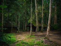 老木小屋在剧烈的样式的雨林里 免版税库存照片