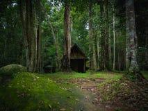 老木小屋在剧烈的样式的雨林里 库存图片