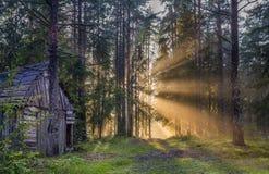 老木房子在日落的杉木森林里 库存图片