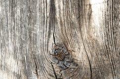 老木房子墙壁的片段  免版税库存照片