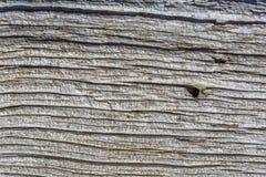 老木木灰色背景,构造土气葡萄酒样式 免版税库存图片
