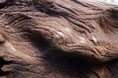 老木材 免版税库存照片