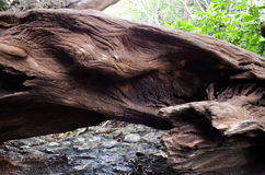 老木材 库存照片