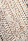 老木柚木树白色颜色背景纹理墙纸 库存图片