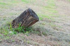老木树桩在森林里 库存图片