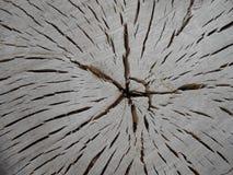 老木树桩纹理  免版税库存图片