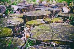 老木树桩路特写镜头 库存图片