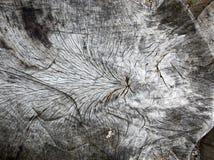 老木树桩 免版税库存照片