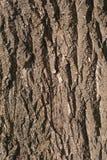 老木树皮纹理背景样式 垂直的图象 免版税库存图片