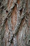 老木树纹理背景样式 垂直的图象 免版税库存图片