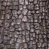 老木树纹理背景,吠声样式 免版税库存照片