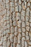老木树纹理背景 库存图片