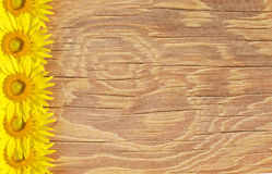 老木框架和背景与太阳开花 库存图片