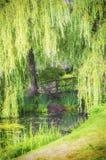 老木桥在森林里 库存照片