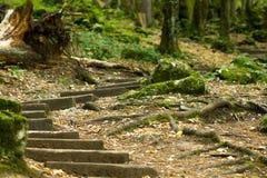 老木楼梯在导致洞的森林里 免版税库存图片