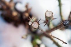 老木橡树裁减表面 详细的温暖的黑褐色和一个击倒的树干或树桩的橙色口气 概略的有机纹理 库存图片