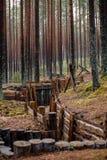 老木沟槽在拉脱维亚 免版税库存图片