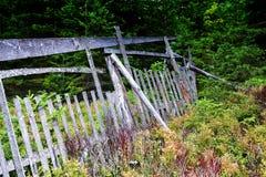 老木篱芭在森林里 免版税库存照片