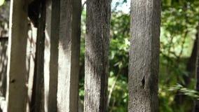 老木篱芭背景自然 股票视频