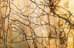 老木纹理,棕色颜色 图库摄影