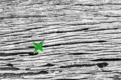 老木纹理黑白照片与一棵小绿色树的 免版税库存照片