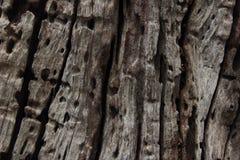 老木纹理 图库摄影