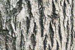 老木纹理 免版税库存照片