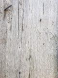 老木背景困厄的自然委员会 库存照片