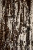 老木背景 免版税库存照片