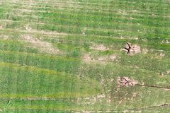 老木表面绘与绿色油漆 库存照片